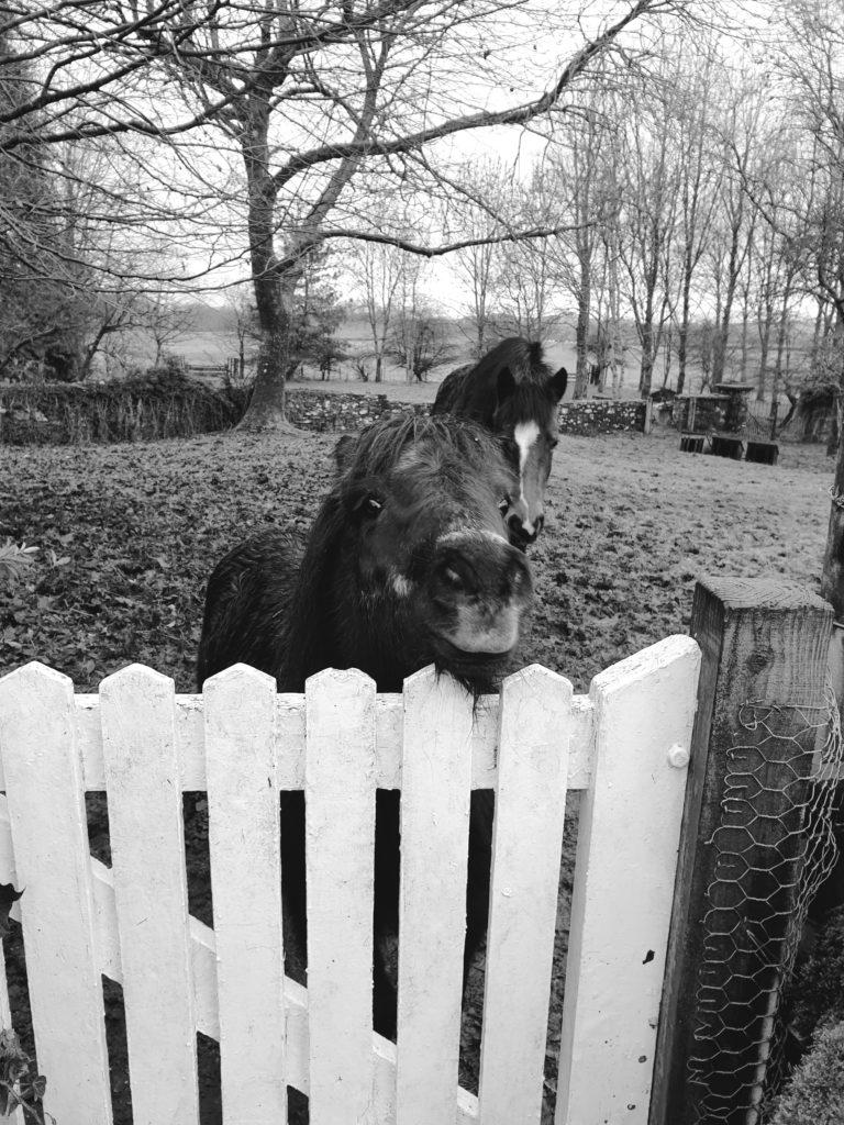 poney écosse jardin
