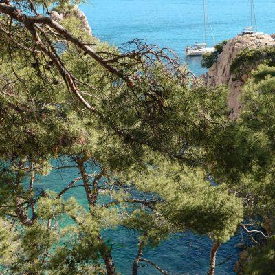arbre vert vacances
