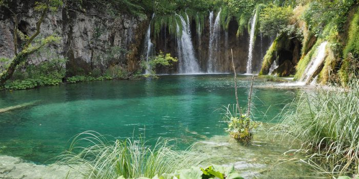 Croatie lac plante